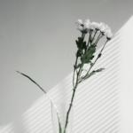 Simplicity_Photo by Imani Bahati on Unsplash